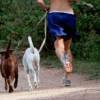 20 Tips To Keep You & Your Dog in Shape