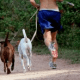 running-with-dog