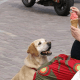 Stop dog begging
