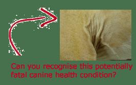 Cushing's Disease in Dogs