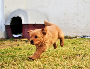 Pet Insurance - Do You Really Need It?