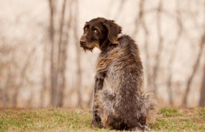 Canine Epilepsy