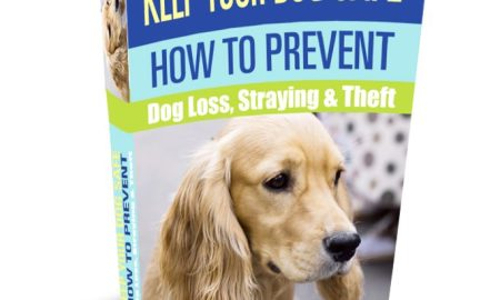 Keep Your Dog Safe