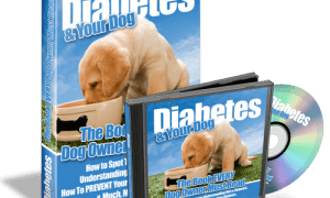 Diabetes-Your-Dog