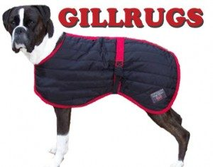 Best Dog Products for Autumn: Knitwear & Coats