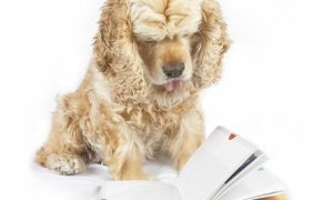 Dog reading book, with the tip of tongue out