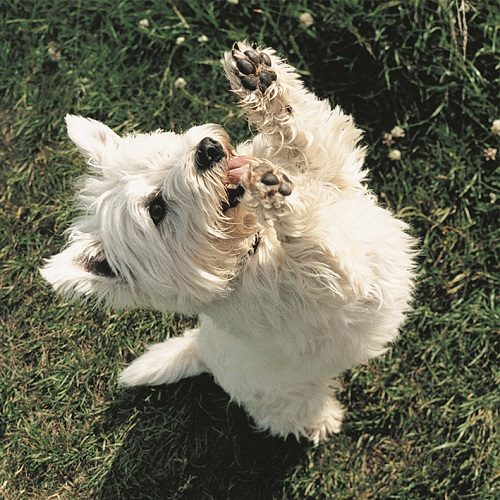 8 Ways To Deal With A Pushy Dog