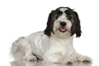 Common Canine Skin Complaints