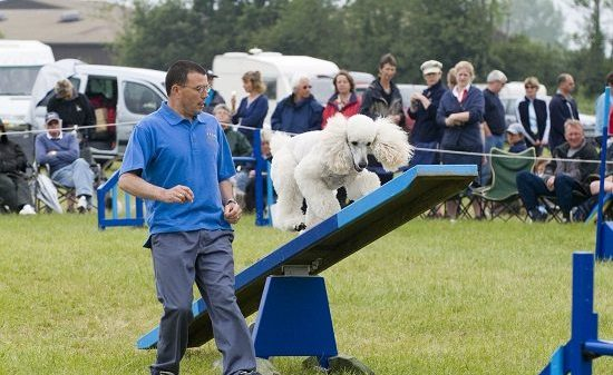 Dog Agility - A Profile Of The Sport
