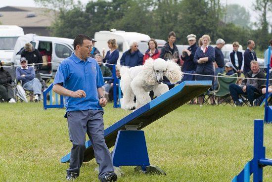 dog agility profile