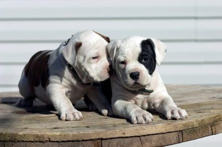 greedy dog breeds