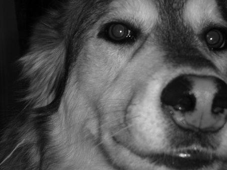 Real Life: Help! My Dog Has Epilepsy