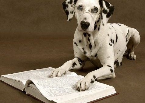 Canine Learning: Instinct vs Learned Intelligence