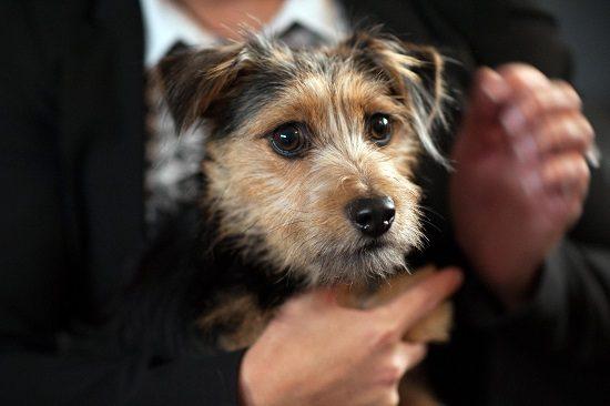 Dexter new Hollyoaks dog