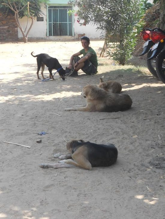 Hanging out with the TOLFA shelter dogs