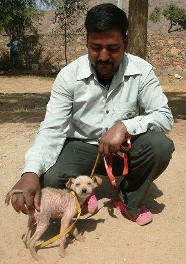 TOLFA staff member Bunty with a dog suffering from mange