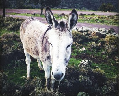 A View from Greece donkey