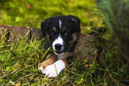 dog garden photo