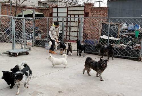A View from China - What's a Dog's Life Worth?