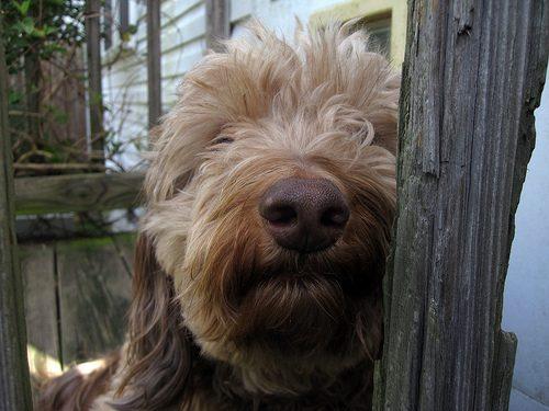 6799185206_01d1f9235c_pampered-dog
