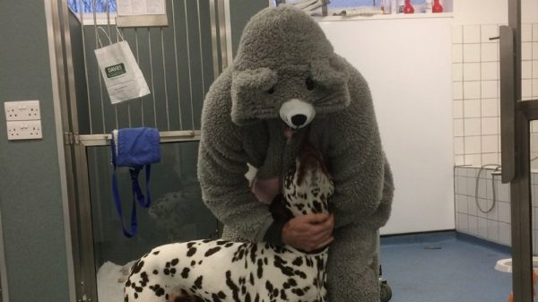 Meet the Vet Who Dressed as a Giant Mouse to Calm a Nervous Rescue Dog