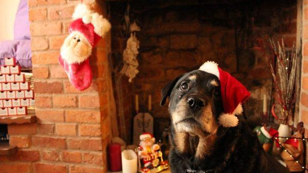 Christmas Dog Treats You Can Make at Home
