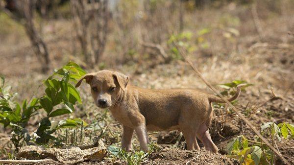 Dogs - The Forgotten Casualties of Sierra Leone's Civil War