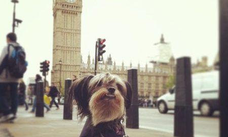 Gus_in_london