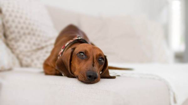 How to Get Rid of Dog Smells in the House