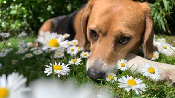 'What My Dog Taught Me About PTSD'
