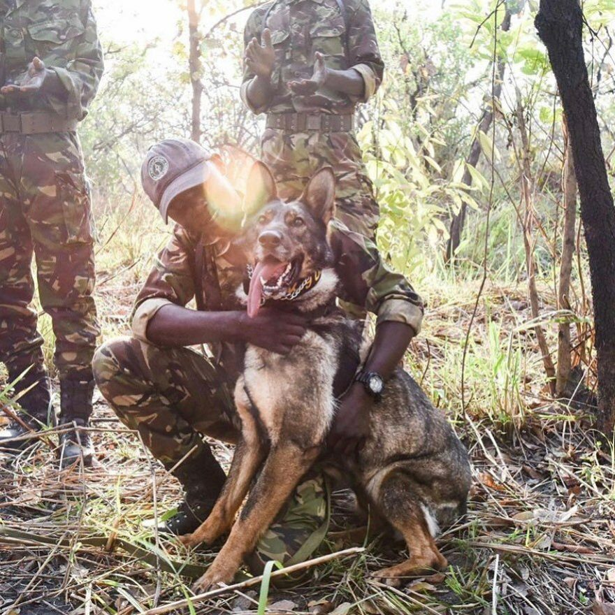 Meet The Dogs Who Protect Africa's Most Endangered Animals