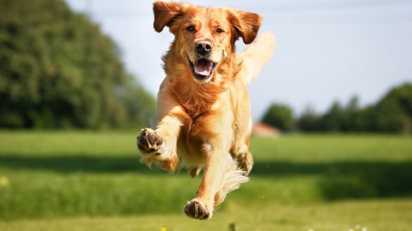 Best Joint Supplement for Dogs (2020 Guide)