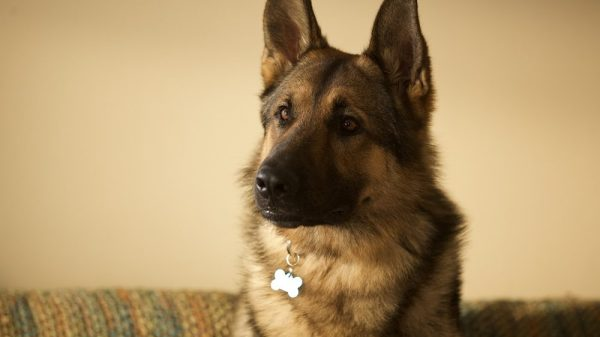 The Story of Rex: The Bomb-Sniffing Dog Who Inspired a Film