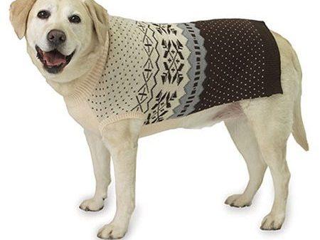 Priscilla & Jools Issue 79 Column - Latest Dog Products
