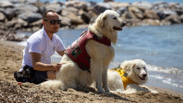 How Do You Train a Water Rescue Dog & Could Your Dog Become One?