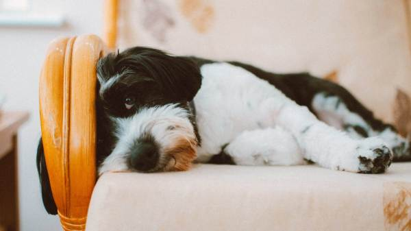 Could a Sleepover Be the Answer to Your Dog's Anxiety?