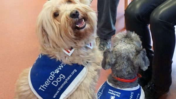 This Is What Happens When Dogs Visit Care Homes