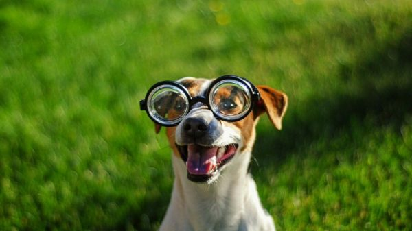 Can Dogs Be Short Sighted? (Watch This Video)