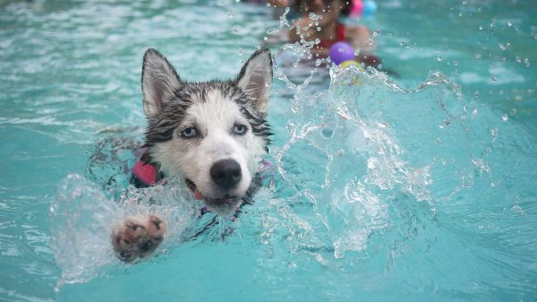 Hydrotherapy For Dogs: Does it Work & What Are The Benefits?