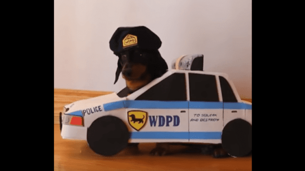 WATCH: 5 Dogs Who Own Youtube