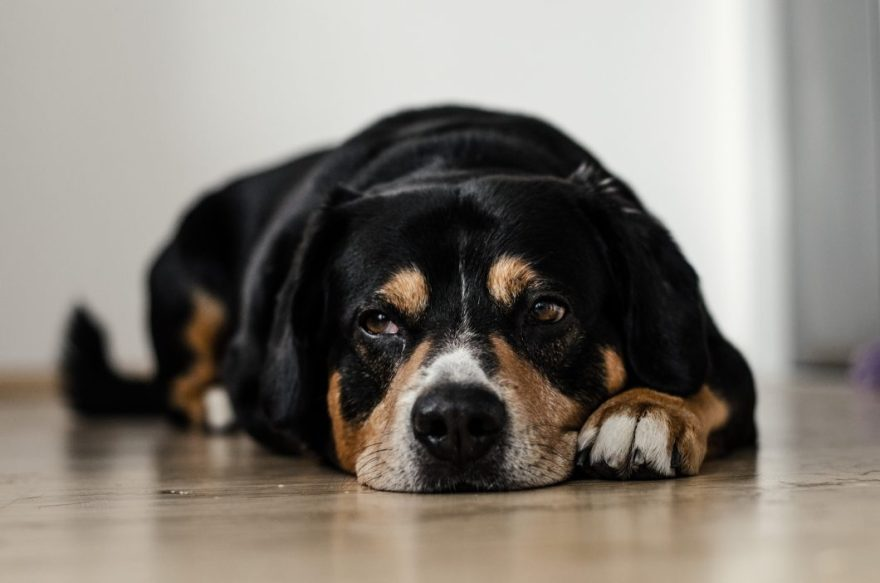 How To Calm An Anxious Dog (Simple, Practical Tips)