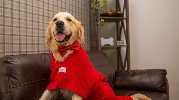 Countdown to Christmas: Gift Ideas for Dogs & Dog Lovers