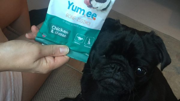Yum.ee Pet Treat Box Review: This Celebrity's Verdict