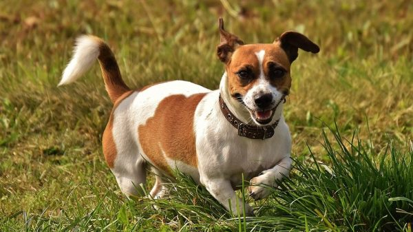 What Is Dehydrated Dog Food & Is It Good for Dogs?