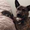 Meet the Dogs Whose Best Friends Defy Expectations