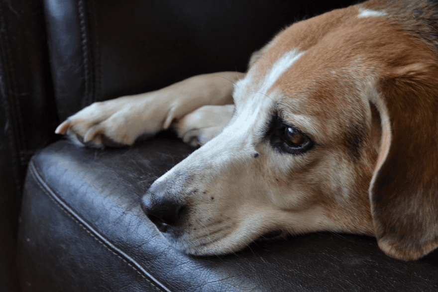 How To Help Your Dog Prepare For Life After Lockdown