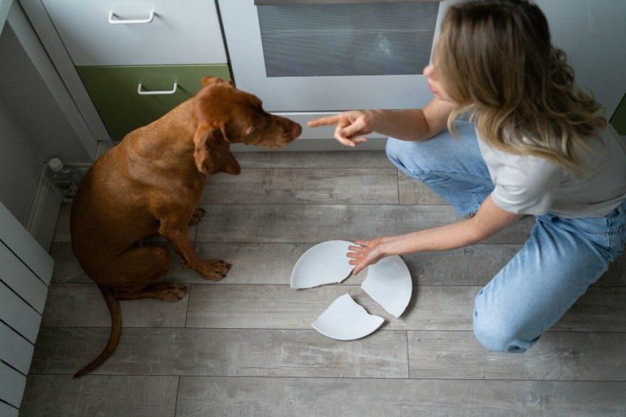 Punishment vs Reward - Which Dog Training Method Works Best?