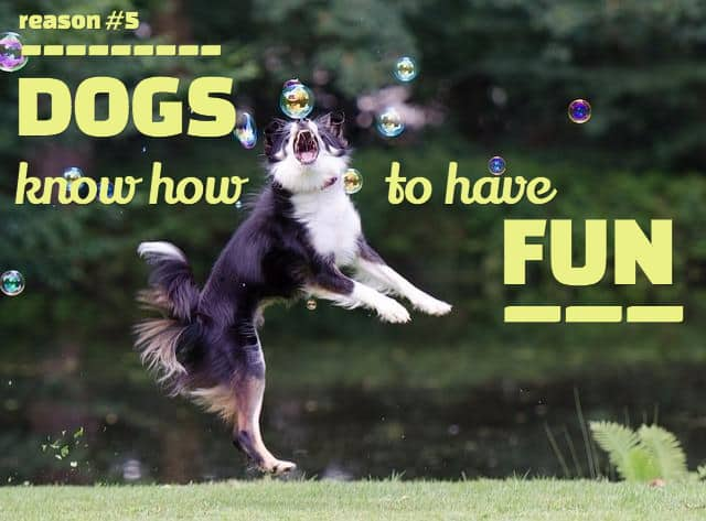 cute dog sayings
