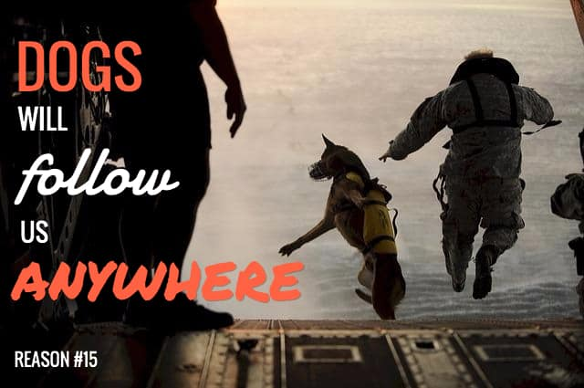 greatest dog sayings