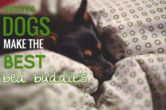 sayings about dogs